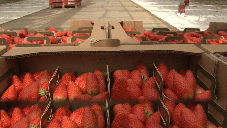 Scongiurare le criticità della filiera alimentare